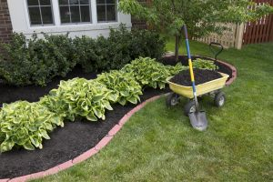 Quality Local Lawn Care by Experts
